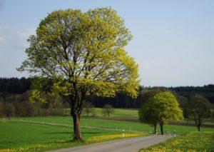 Bluehend_Baum